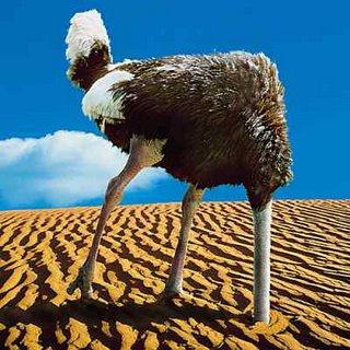 Ostrich-head_in_sand