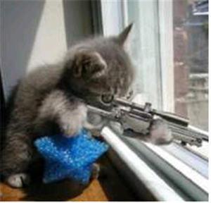 Bad_kitten_at_window