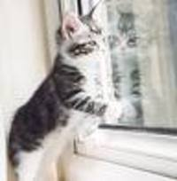 Kitten_window_2
