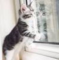 Kitten_window_2