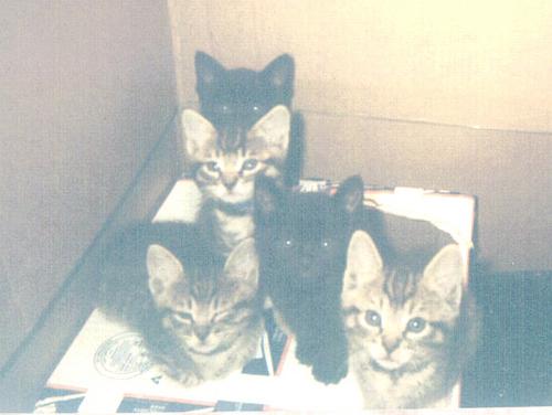 Feral_kittens