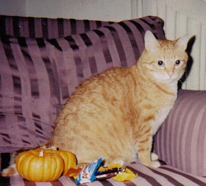 Halloween_peabody